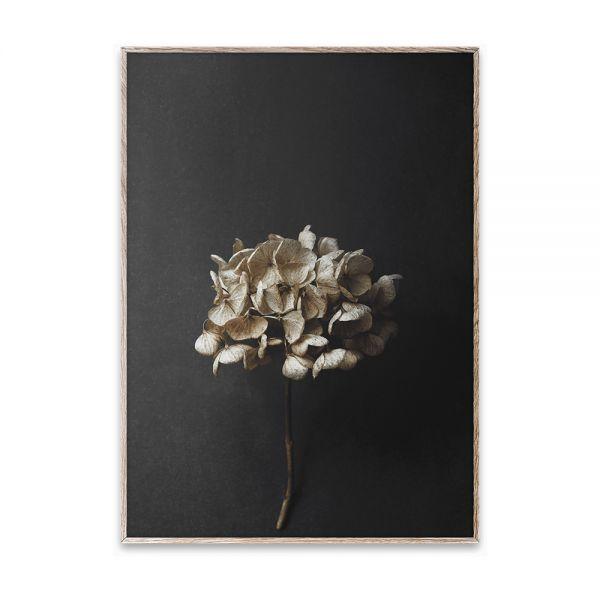Poster - Still Life 04 - 50x70 cm
