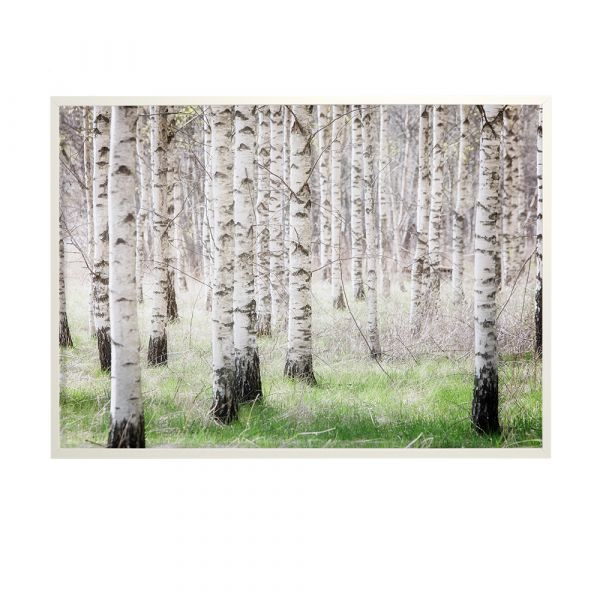Poster Birch Forest - 50 x 70 cm