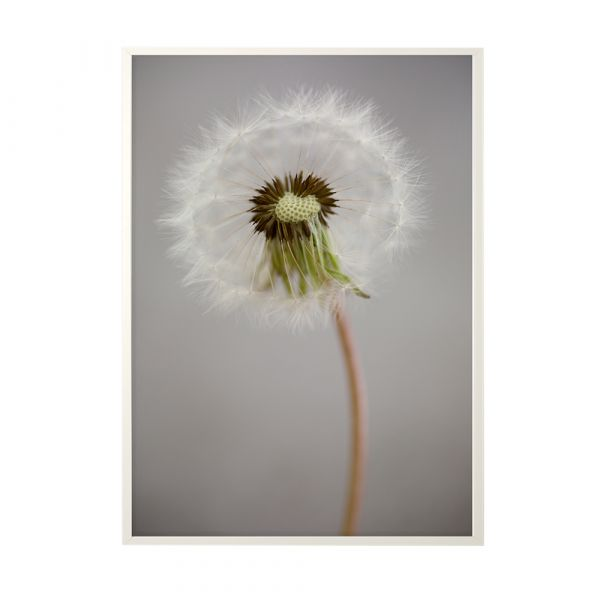 Poster Wilted Beauty - 50 x 70 cm