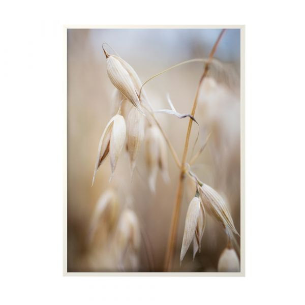 Poster Oat In The Open - 50 x 70 cm
