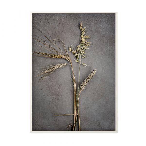 Poster Four Grains - 50 x 70 cm