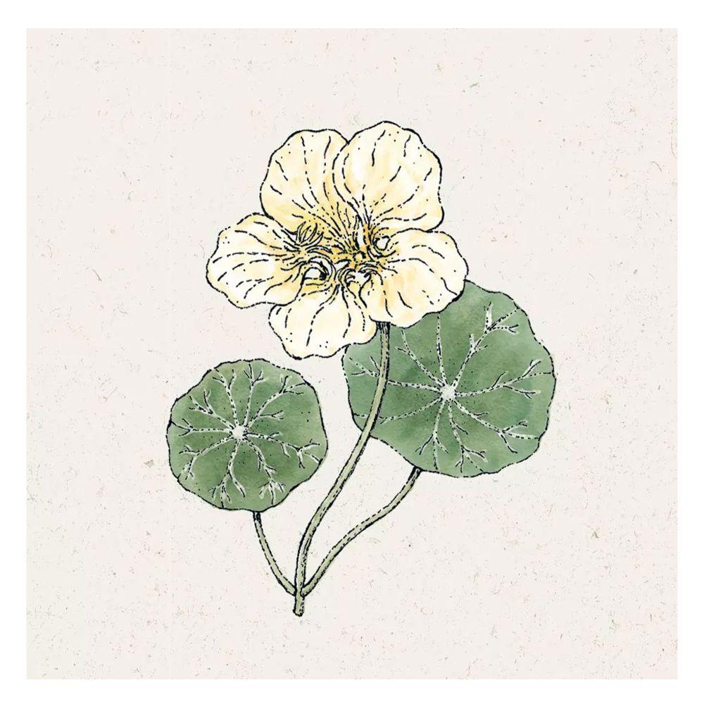 Blumensamen - Tropaeolum Minus Ladybird Rose (Kapuzinerkresse)