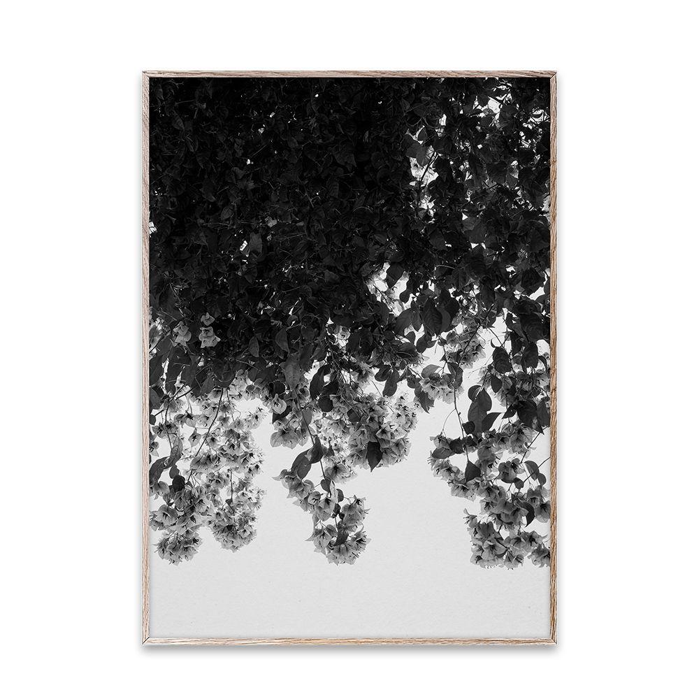 Poster - Flowers - 50x70 cm