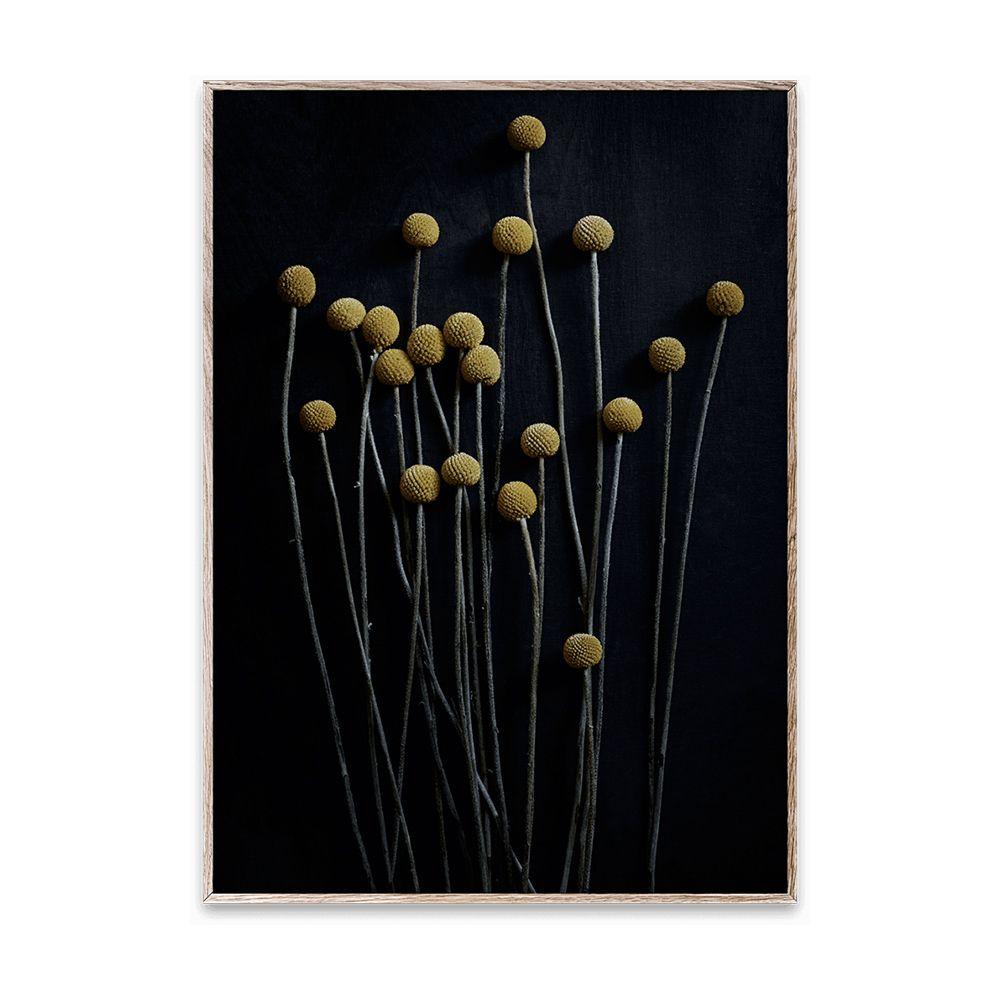 Poster - Still Life 01 - 50x70 cm