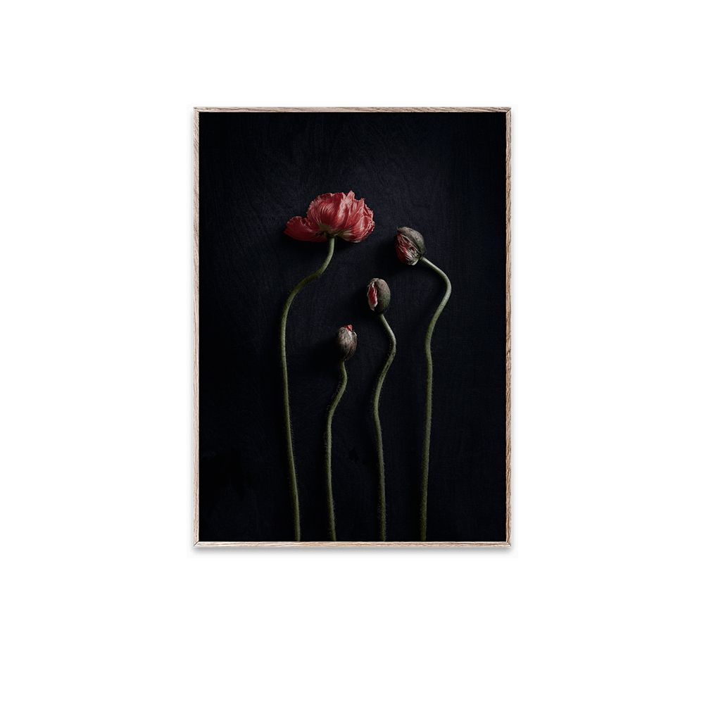 Poster - Still Life 02 - 30x40 cm