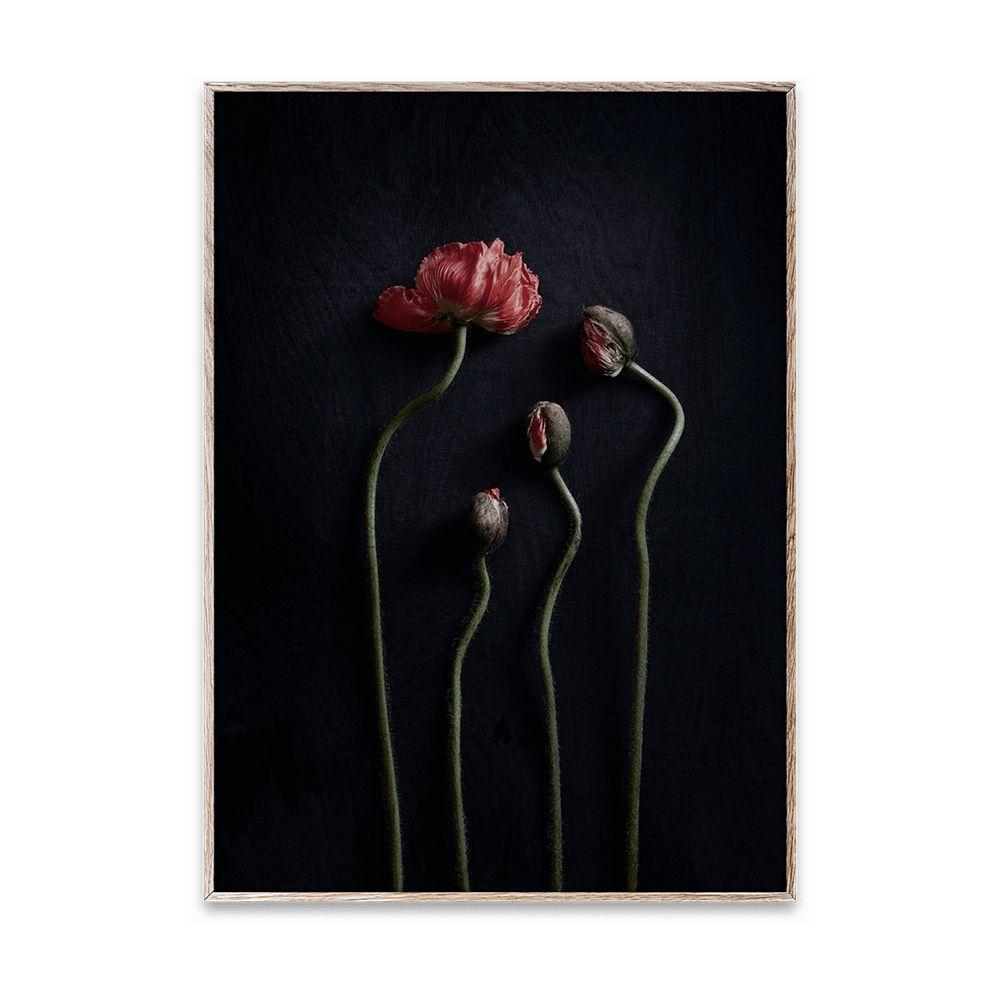 Poster - Still Life 02 - 50x70 cm