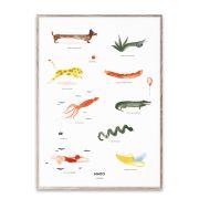Poster - Mado & Friends - 50x70 cm