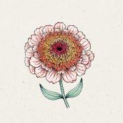 Blumensamen - Zinnia Elegans Zinderella Peach (Zinnie)