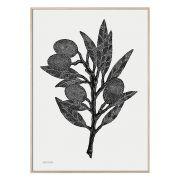 Druck Olive Branch - schwarz/weiß